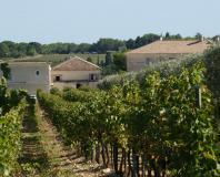Saint-Drézéry - domaine viticole