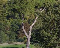 Juvignac - le golf