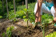 Soirée « Une autre forme d'agriculture est possible ! »