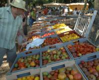 Clapiers - Le Festival de la tomate